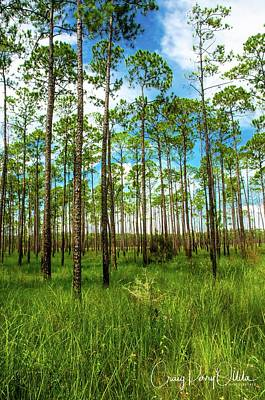 Photograph - Swamp Trees by Craig Perry-Ollila