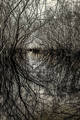 Photograph - Swamp Tunnel by Andy Crawford