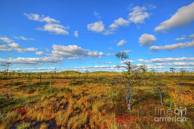 Moss Photograph - Swamp by Veikko Suikkanen