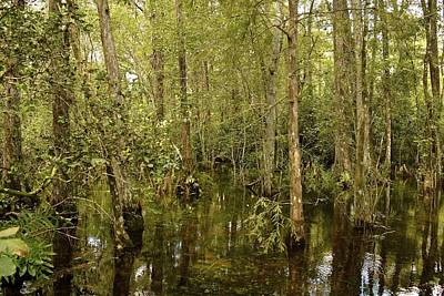 Photograph - Swamp Water by Carol  Bradley