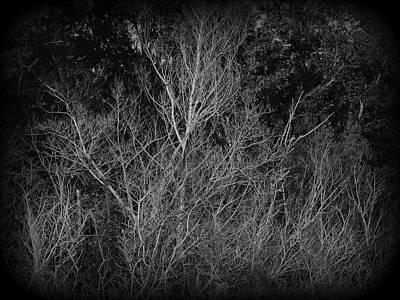 Photograph - Swamp Water Wetlands Florida by David Mckinney