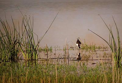 Photograph - Swamp With A Warm Glow by Rosalie Scanlon