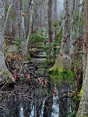 Photograph - Swamped by Laura Ragland