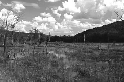 Photograph - Swampoem by Curtis J Neeley Jr