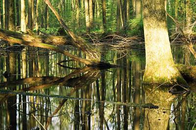 Swamps Are Beautiful Too Original