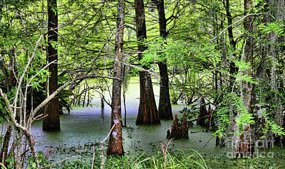 Avery Island Photograph - Swamps Avery Island I by Chuck Kuhn