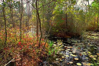 Swamps In Sc Print by Susanne Van Hulst
