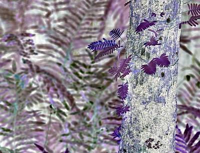 Photograph - J-lintz - Ferns Of A Different Color by John Hintz