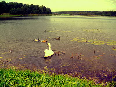 Photograph - Swan And Ducks by Henryk Gorecki