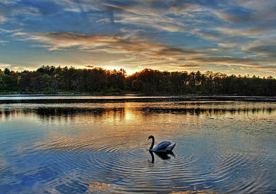 Swan At Sunset Art Print