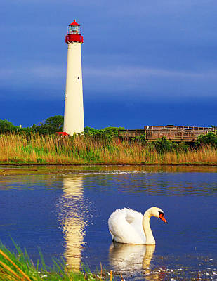 Swan At The Lighthouse Art Print by Nick Zelinsky