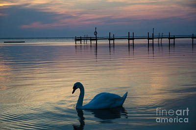 Photograph - Swan At Twilight Reflections by Kennerth and Birgitta Kullman
