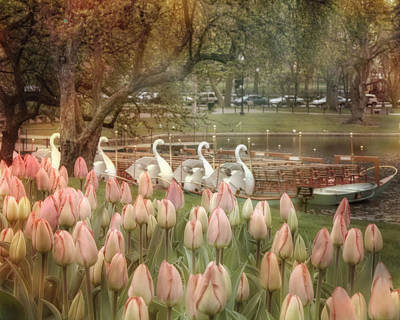Spring Scenes Photograph - Swan Boats And Tulips - Boston Public Garden by Joann Vitali