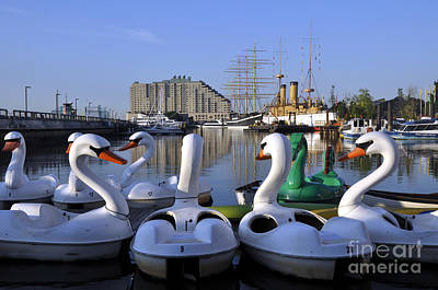 Photograph - Swan Boats by Andrew Dinh