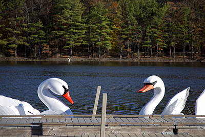 Photograph - Swan Boats by Joanna Madloch