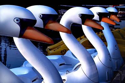 Swan Boats Art Print by Robert Lacy