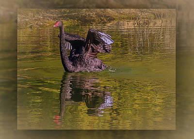 Photograph - Swan Dance 2 by Leticia Latocki