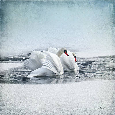 Photograph - Swan Dance by Jutta Maria Pusl