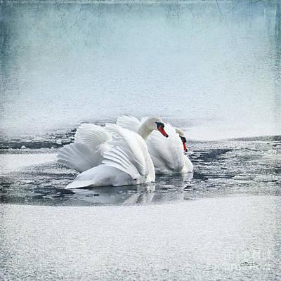 Photograph - Swan Dance by Jutta Maria Pusl