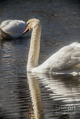 Art Print featuring the photograph Swan by David Bearden