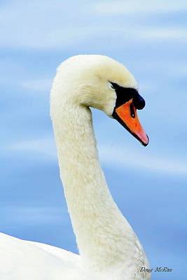 Portrate Photograph - Swan by Doug Mcrae