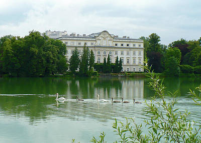 Photograph - Swan Family On Salzburg Lake by Carol Groenen