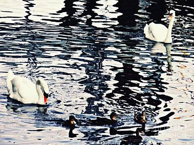 Photograph - Swan Family On The Rhine by Sarah Loft