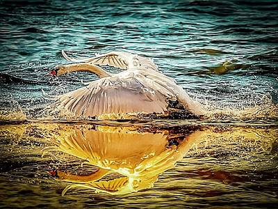 Photograph - Swan Flight  by Cliff Norton