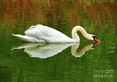 Photograph - Swan Heart by Jerry Cowart
