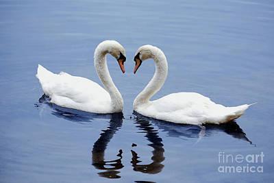 Photograph - Swan Heart by Staci Bigelow
