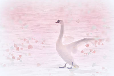 Photograph - Swan Hearts by Diane Alexander