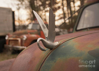 Photograph - Swan Hood Ornament by Terry Rowe