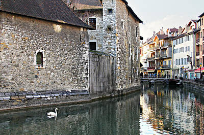Photograph - Swan In Annecy France Canal by Katie Wing Vigil