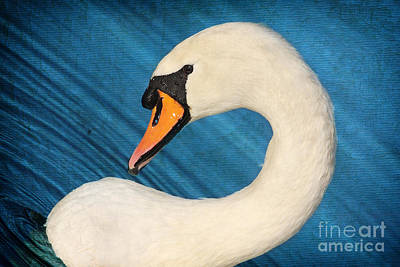 Photograph - Swan In The Blue by Lisa Cockrell