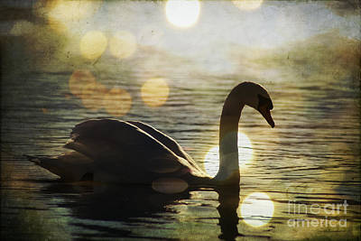 Photograph - Swan by Joel Witmeyer
