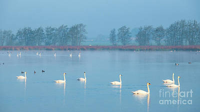 Photograph - Swan Lake-2 by Casper Cammeraat