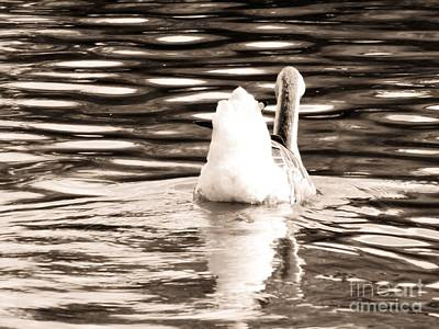 Photograph - Swan Lake #2 Sepia by Robyn King