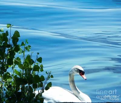 Photograph - Swan Lake by Bobbee Rickard