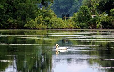 Photograph - Swan Lake by Cynthia Guinn