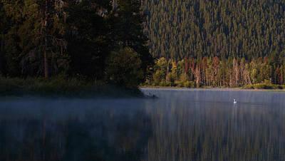 Photograph - Swan Lake by David Andersen