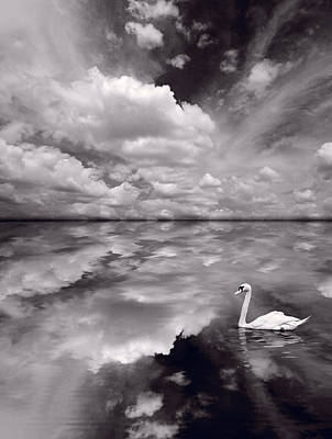 Manipulation Photograph - Swan Lake Explorations B W by Steve Gadomski