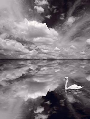 Swans Photograph - Swan Lake Explorations B W by Steve Gadomski