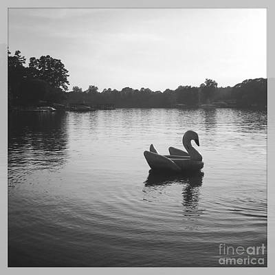 Photograph - Swan Lake  by J Kinion