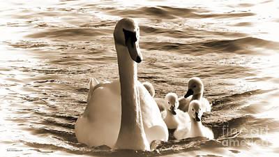 Swan Lake Art Print by Jason Christopher