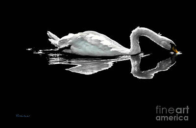 Swan Lake Nature Photo 2121a Art Print