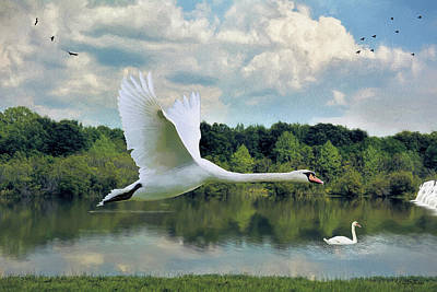 Painting - Swan Lake - Painting by Ericamaxine Price