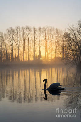 Morning Mist Photograph - Swan Lake by Tim Gainey