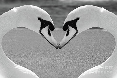 Photograph - Swan Love Art - Couple Of Swans Forming Heart by Wall Art Prints