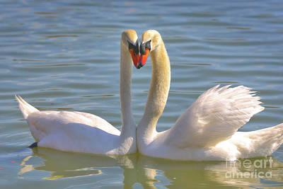 Photograph - Swan Love by Carol Groenen