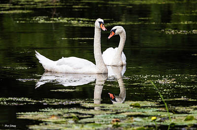 Photograph - Swan Love by Fran Gallogly